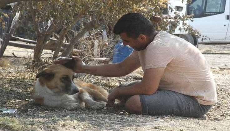 Yangında kaybolan köpeği 4 gün sonra geri geldi, gözlerine inanamadı