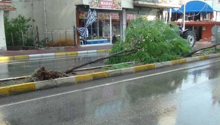 Fırtına sebebiyle devrilen ağaca vatandaş müdahalesi