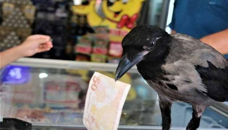 Marketçinin yolda bulduğu karga, mahallenin maskotu oldu