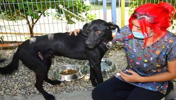 Manavgat'ta veterinerler, yaralı canlar için seferber oldu