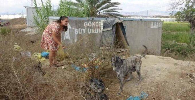 Garsonluk yaptıkları otelde çöpe atılan yemeklerle sokak köpeklerini besliyorlar