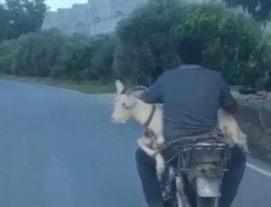 Keçinin motosiklet yolculuğu gülümsetti