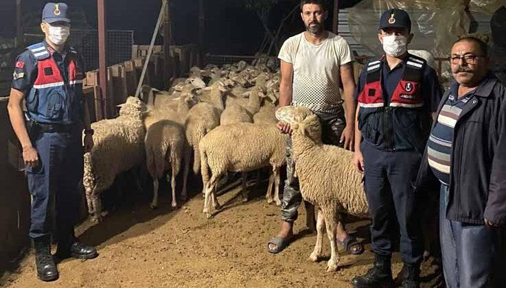 Ağılın kapısının açık unutulmasını fırsat bilip kaçan 46 koyun, jandarma tarafından bulundu