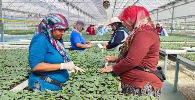 Fide üretim tesisleri 5 bin kadına ekmek kapısı oluyor