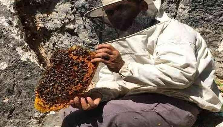 """Doğal bal için günlerce """"firari"""" arıların izini sürüyorlar"""